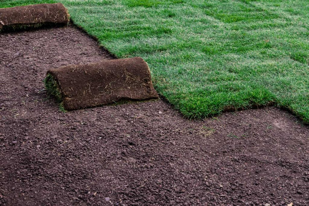 The best Sunnyvale sod grass installation company