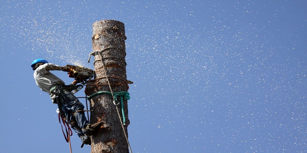 tree removal service in dallas