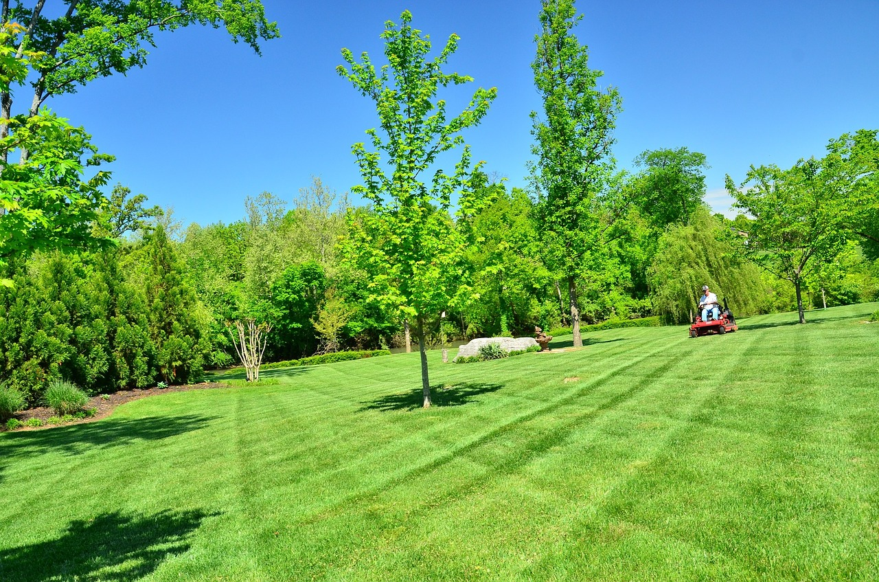 lawn-grass-seeding-tips
