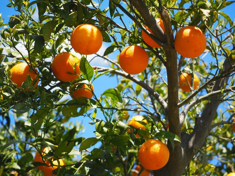 how to plant a new fruit tree