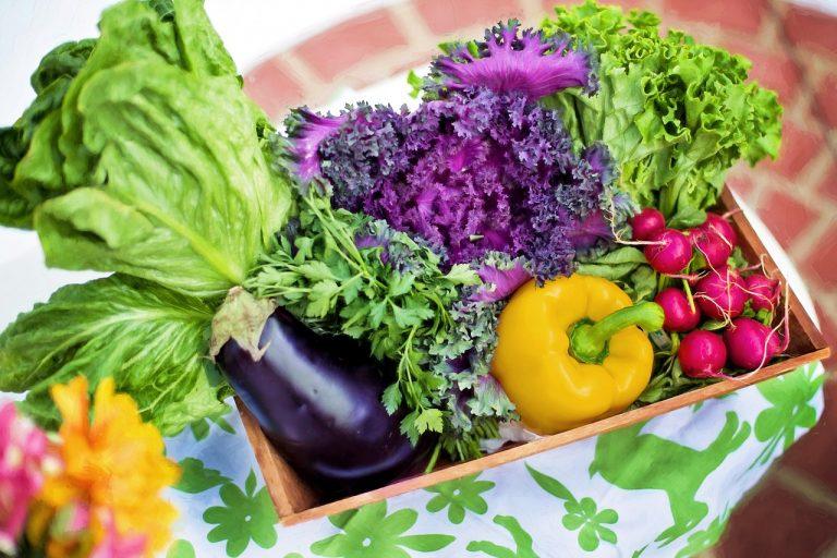 vegetable gardening tips every gardener should have